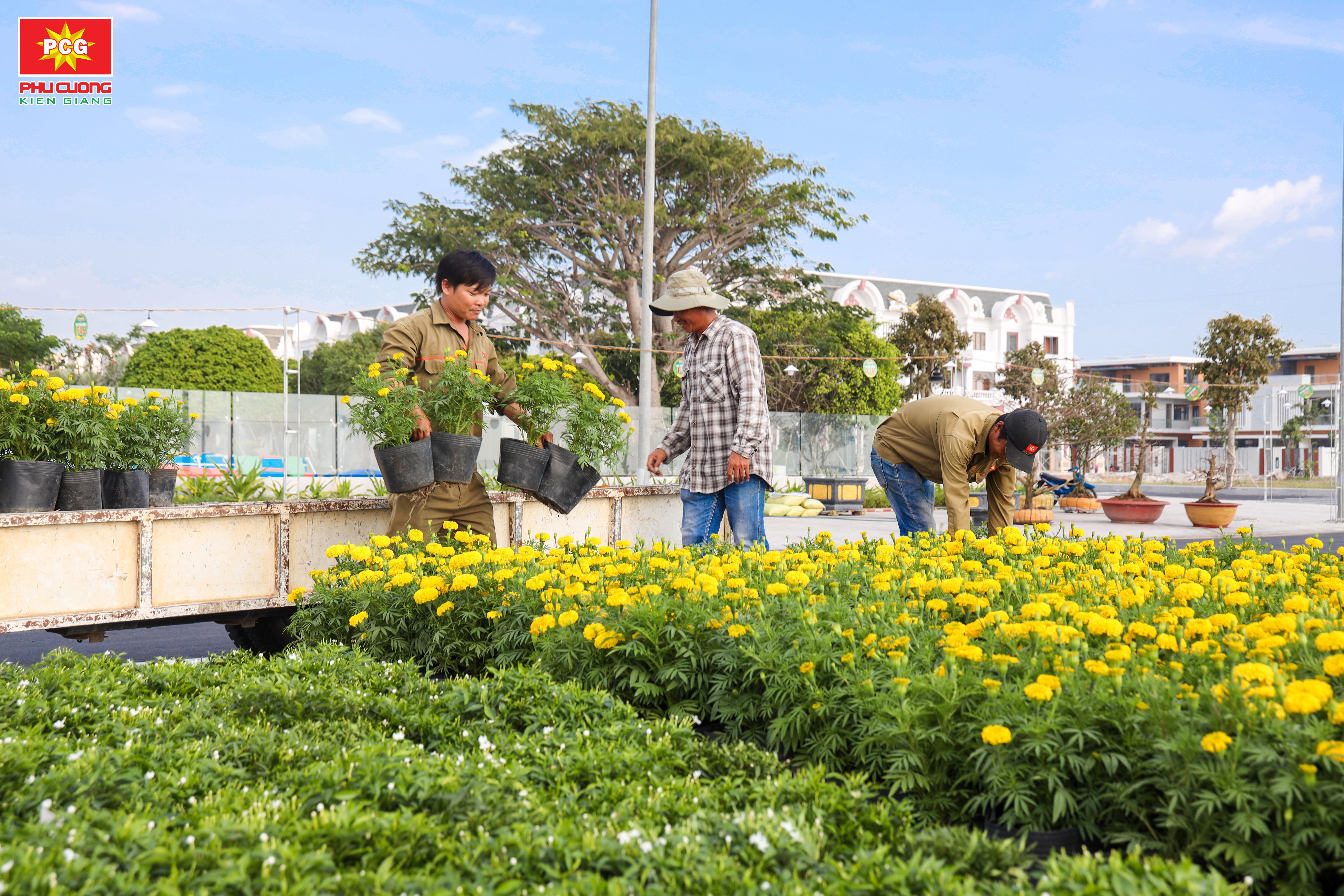 Hoa Mang Sắc Tết Về Khu Đô Thị Phú Cường
